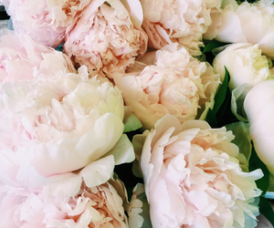 flowers, gentle, and peonies image