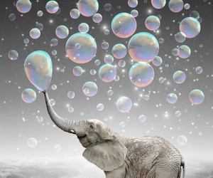 bubbles, elephant, and dreams image