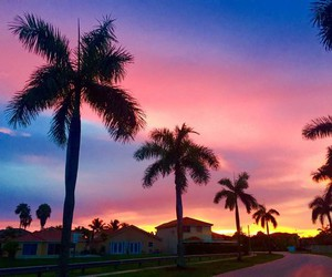 sunset, sky, and palm trees image