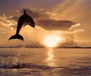 dolphin, sea, and sunset image