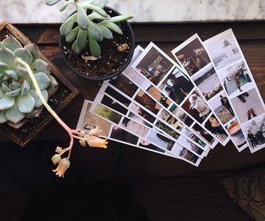 plants, photo, and photography image