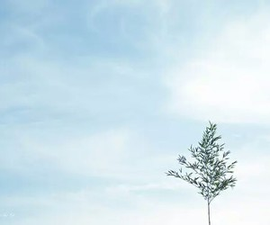 sky, nature, and tree image