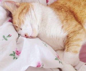 aww, bed, and cat image