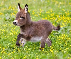 donkey, cute, and animal image