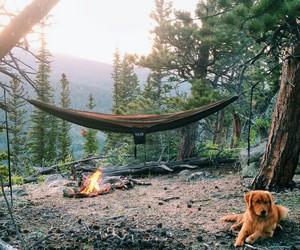 dog, nature, and camping image