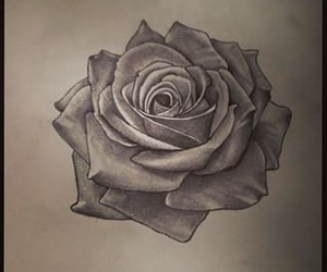 rose, tatoo, and tattoo image