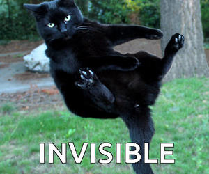 funny cats, cat meme, and funny cat meme image