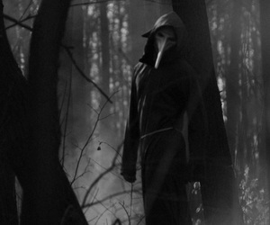 black and white, dark, and forest image
