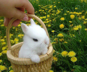 bunny, flowers, and animal image