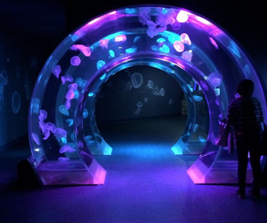cool, glow, and jellyfish image