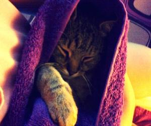 purple, sleep, and my love image
