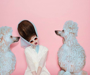 pink, poodle, and dogs image