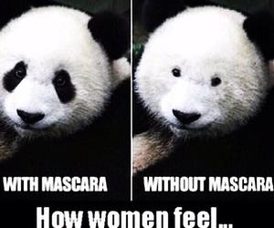 funny, mascara, and panda image