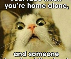 cat, lol, and homealone image