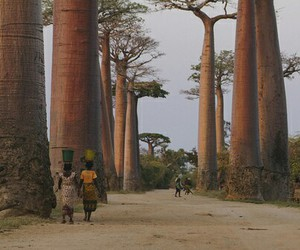 africa, love, and baobab image