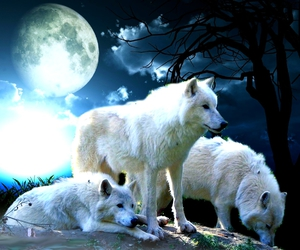 animals, girl, and wolf image