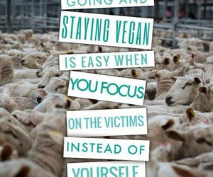 vegan, animal rights, and vegetarian image