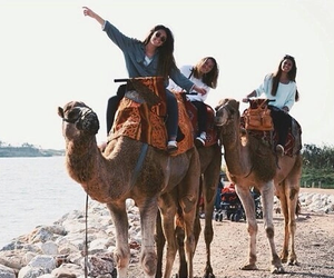 friends, camel, and travel image
