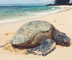 animal, beach, and sea image