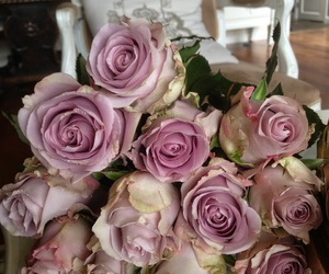flower, lovely, and rose image