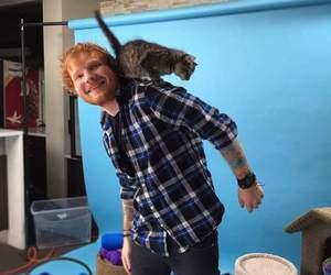 cute, cat, and ed sheeran image