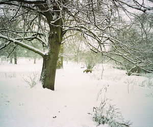 35mm, cold, and ely image