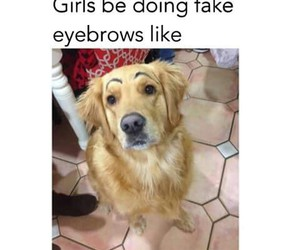 funny and eyebrows image