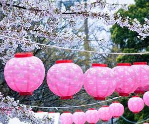 beautiful, blossoms, and japan image