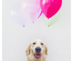 balloon, dog, and golden image