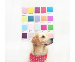 colors, dog, and golden image