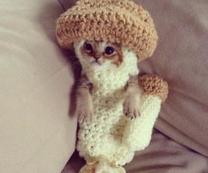 cat, cute, and mushroom image