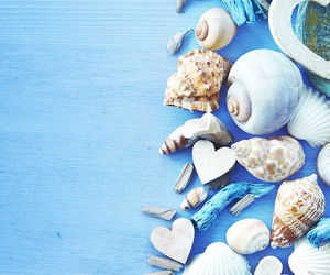 wallpaper, shells, and blue image