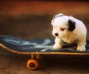 dog, cute, and skate image