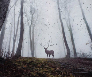 dark, forest, and cerf image