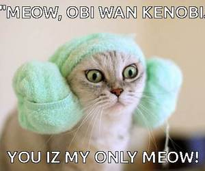 cat, cats, and funny cat image