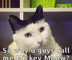 cats, funny cat, and kittens image