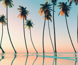 beach, palm tree, and paradise image