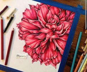 art, rose, and red image