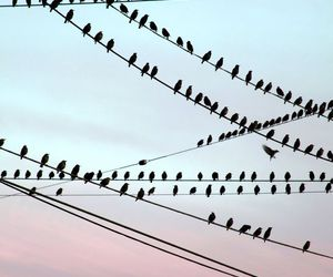 birds, photo, and love image