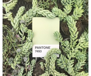 pantone and plants image