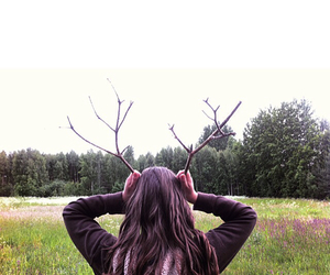 animal, brown hair, and deer image