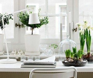 white, flowers, and home image