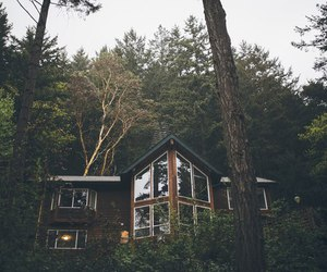 forest, home, and tree image