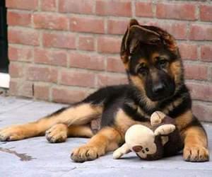 dog, puppy, and baby animals image