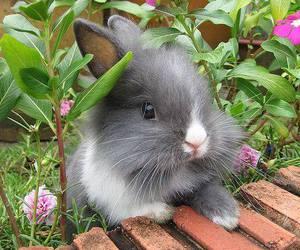 bunny, animal, and rabbit image
