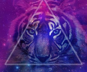 tiger, hipster, and galaxy image