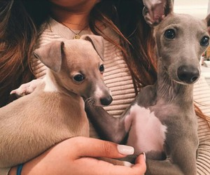 dog, kylie jenner, and norman image