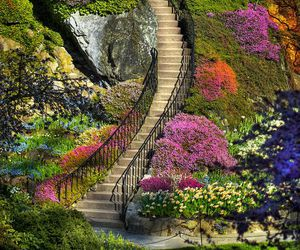 flowers, stairs, and garden image