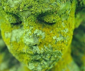 green, statue, and moss image