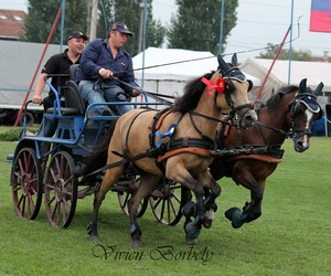 carriage, competition, and driving image